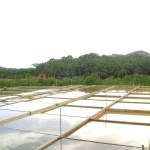 Sulong02