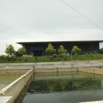 Sulong14