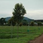 Sulong15